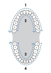 watetr-flosser-guide-teeth
