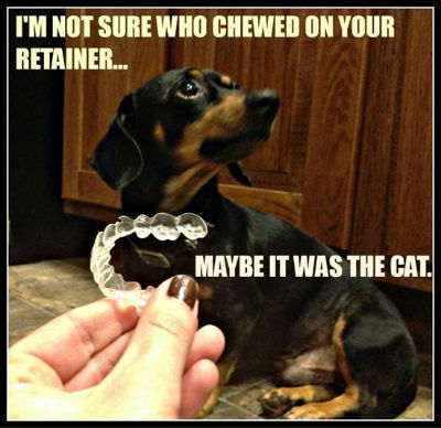 who-chewed-the-retainer-meme