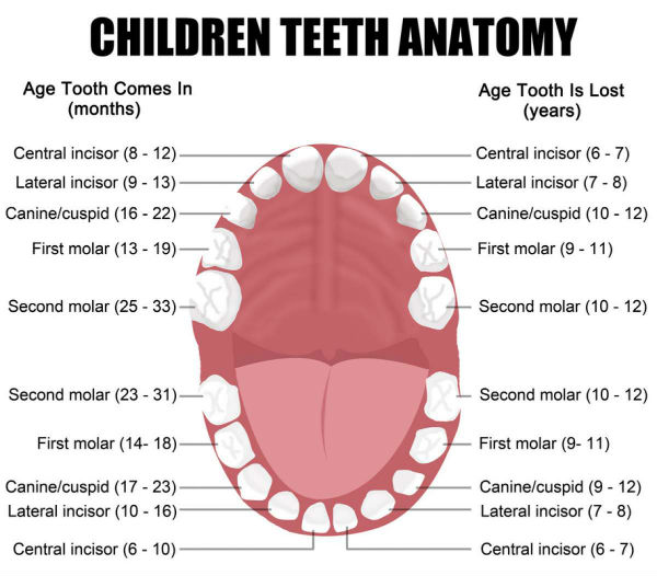 baby teeth faq
