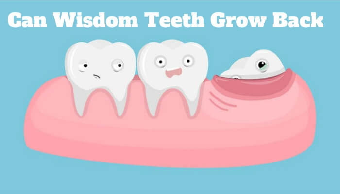 Can Wisdom Teeth Grow Back
